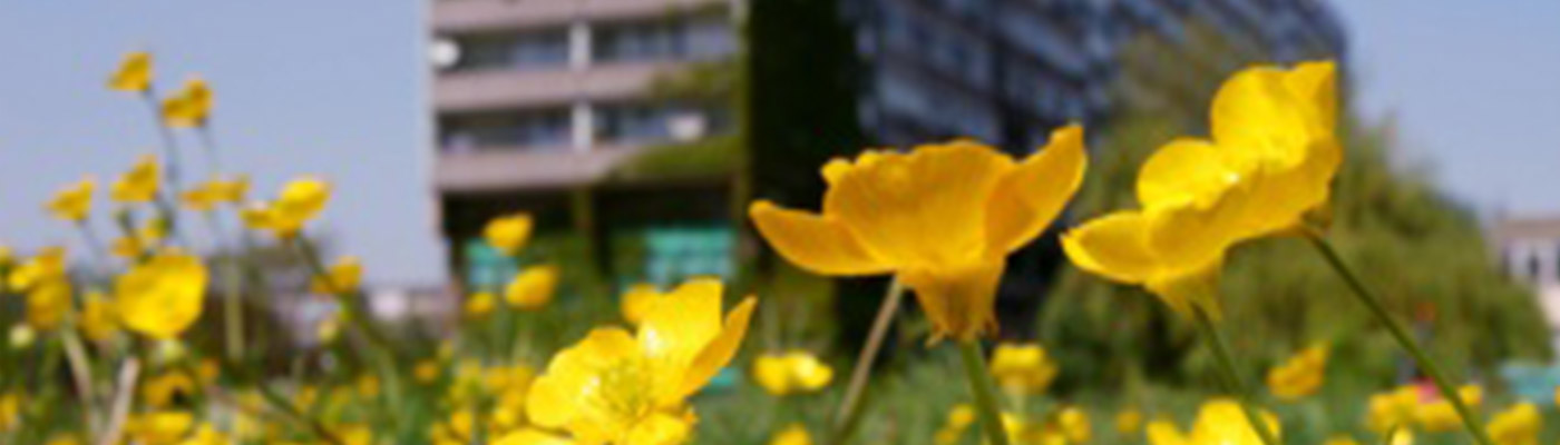 public-buttercups-tower-block